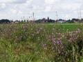 Fotoalbum Geart Siesling, 098, It nije fietspaad lâns de Zwette by Easterwierrum, 15-08-2014
