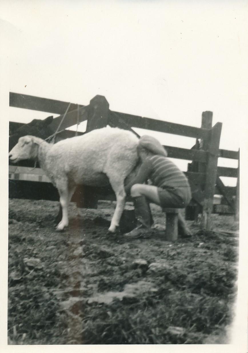 Fotoalbum Andre Kamsma, 036, Lauw Kamsma by Germ Meintes Boersma op de pleats, jierren 30