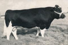 Fotoalbum-Gjetje-Wondaal-Hoekstra-022-Bolle-Freark-H.A.-de-Vries-1958
