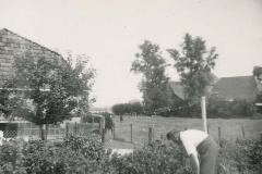 Fotoalbum Sytse Alberda, 036, Alberda yn de frambozen achterhûs op de Dille