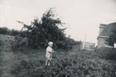 Fotoalbum Sytse Alberda, 037, Sytse Alberda helpe yn de tún