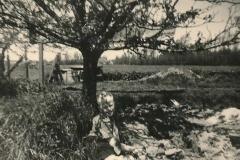 Fotoalbum Sytse Alberda, 097, Sytse, 3 july 1955