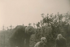 Fotoalbum Sytse Alberda, 118, Jirpelsykje, aug 1960