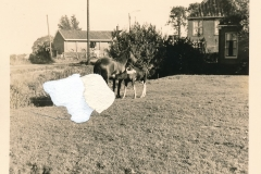 Fotoalbum Sytse Alberda, 122, Blik op de Dille, 11-04-1965